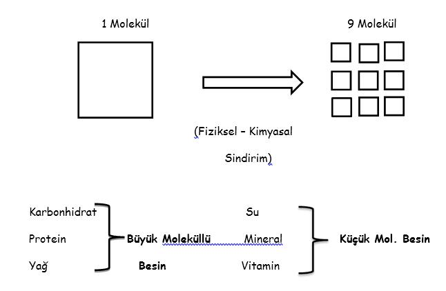 sindirim-1