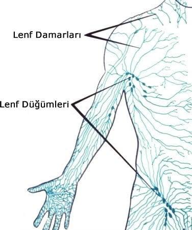 http://www.karmabilgi.net/images/lenf.jpg